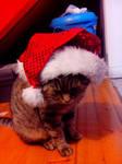 My cat Tom :)