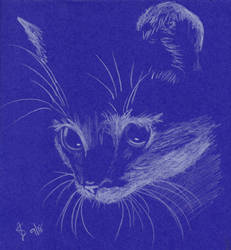 Cat by MercuryRapids