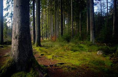 Birnam Woods In November 5