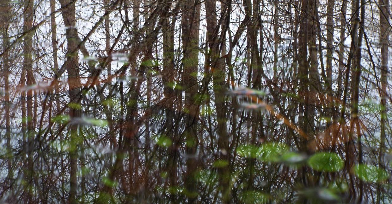 Woods' Mirror by jgoo055
