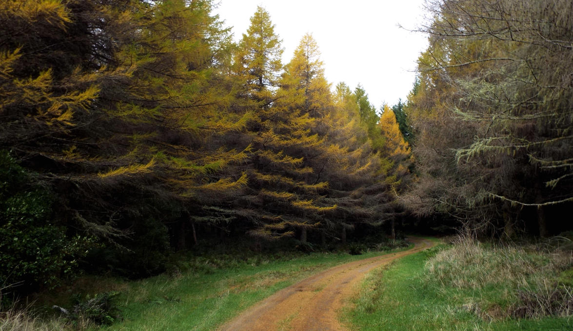 Autumn's Way by jgoo055