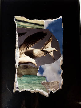 Estuary Gulls 1