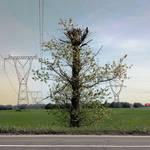 Drzewo by JaBoJa