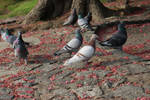 Pigeons among the pink flowers