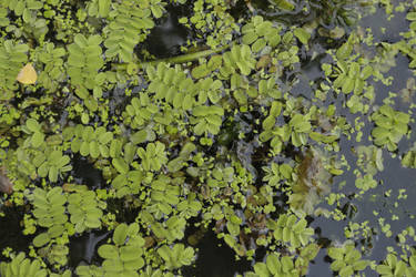 Pattern of the plansts floating on a water surface by JaBoJa