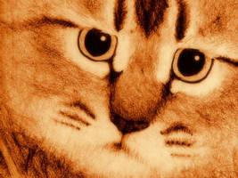 Kitty Face Desktop Wallpaper by asynjur