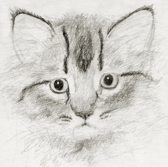Little Kitty Sketch by asynjur