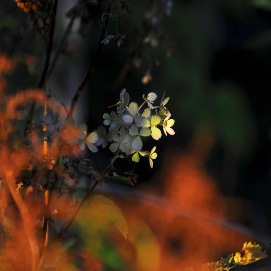 Pleasures of Autumn
