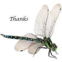 Dragonfly thanks by bast4cats