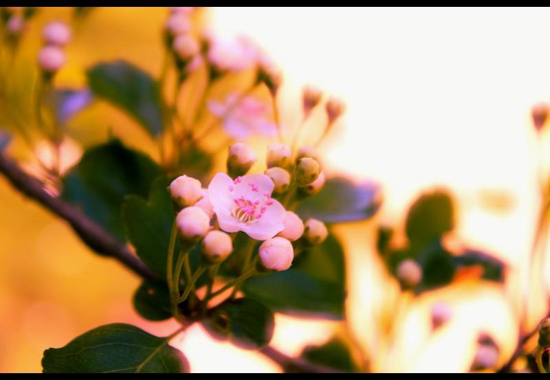 Spring by LeaBissiau