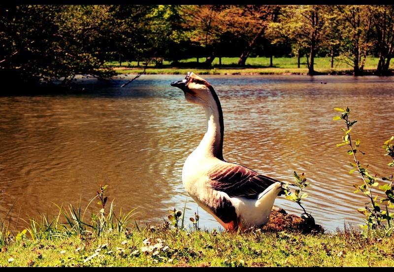 Duck II by LeaBissiau