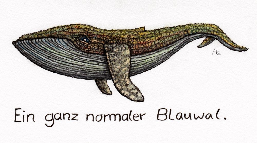 Blauwal zeichnen I Ein ganz normaler Blauwal by StampferAlex