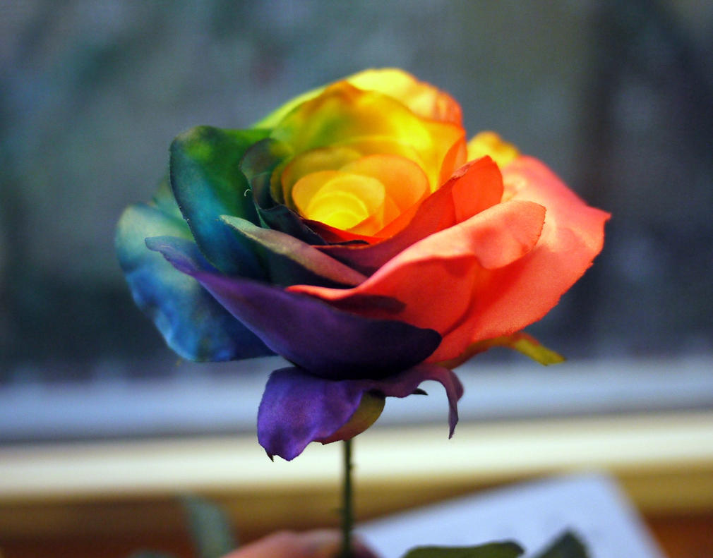 Accidental Rainbow Rose by 8bitHealey