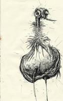 ostrich by nico37