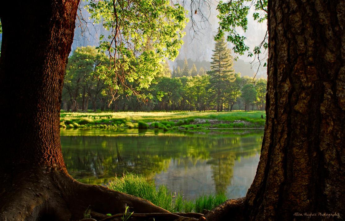 Between The Trees By Allen59 On Deviantart