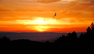 Soars At Dawn