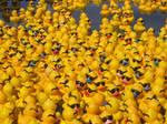 A Pack of Quacks
