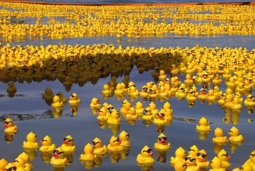 Rubber Duck Sea