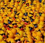 A Pack of Quacks - Square