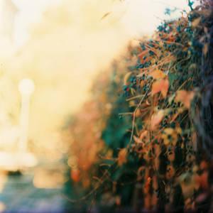 6x6 autumn