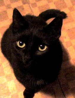 Oh, so lovely black cat by lady-fretten