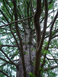 tree by sclarke1986