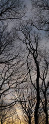 sunset through the trees by sclarke1986