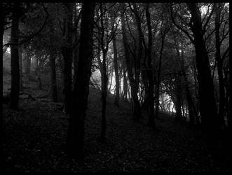 Through the Trees by sclarke1986