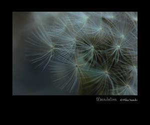 Dandelion by berryrika