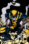 Wolverine On Skulls