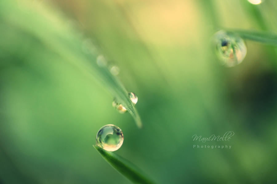 Green emotions. by MelissaBalkenohl