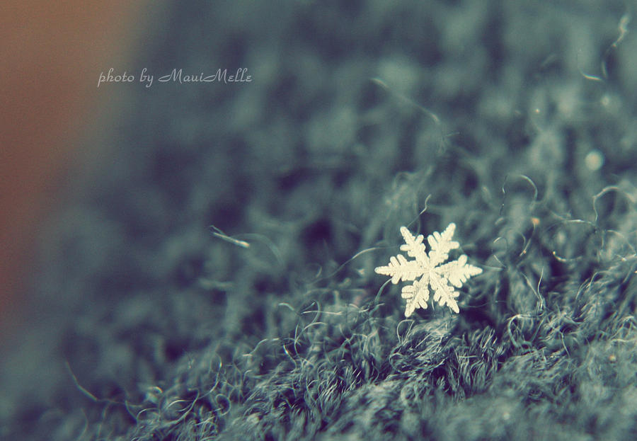 Snowflake. by MauiMelle