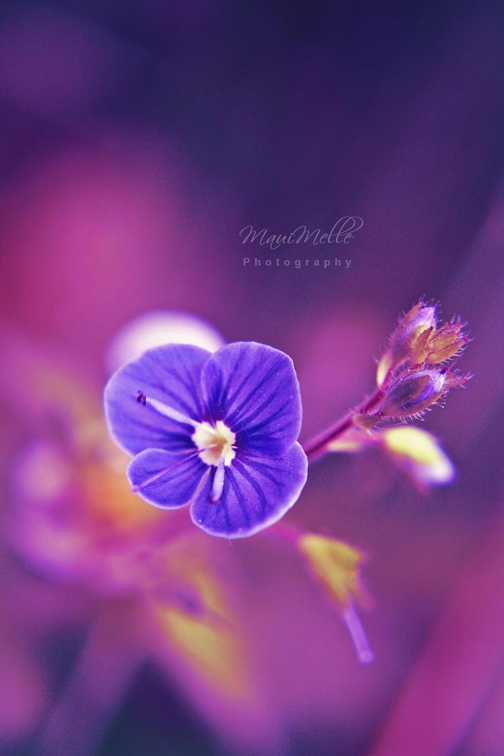 It's magic~ by MauiMelle