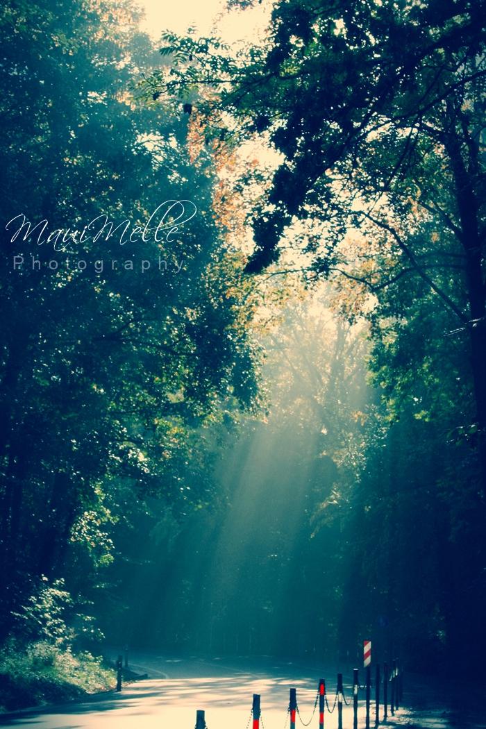 La vie est belle  by MauiMelle