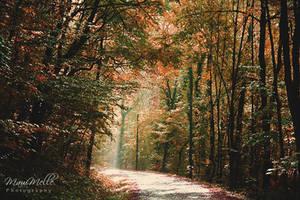 Autumn feelings~ by MelissaBalkenohl