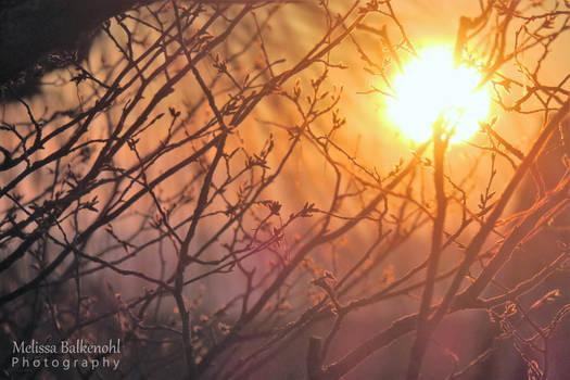Winter Sun ~
