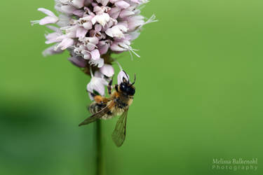 Let it Bee by MelissaBalkenohl