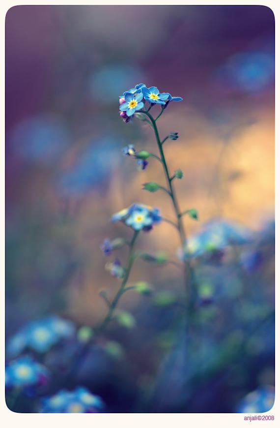 Vintage garden - 2 by anjali