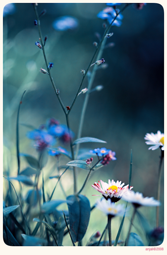 Vintage garden - 4 by anjali
