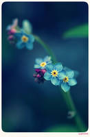 Forget me not - 3