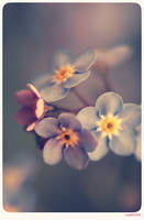 Forget me not - 12