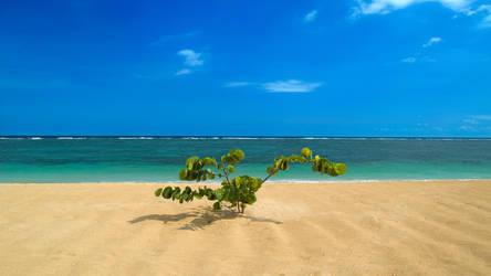 Paradise by bigfoothazza