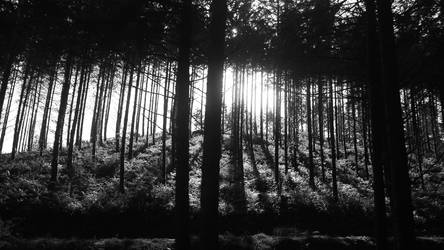 Cardinham Woods by bigfoothazza