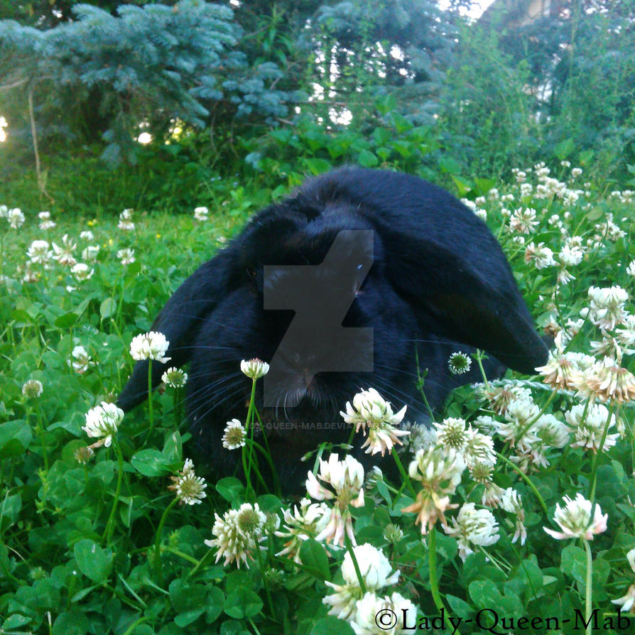 Black Rabbit in the Clover by Lady-Queen-Mab on DeviantArt