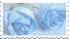 Blue roses - (F2U) by Angelceleste