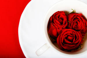 Drink Love by Fahad-qtr