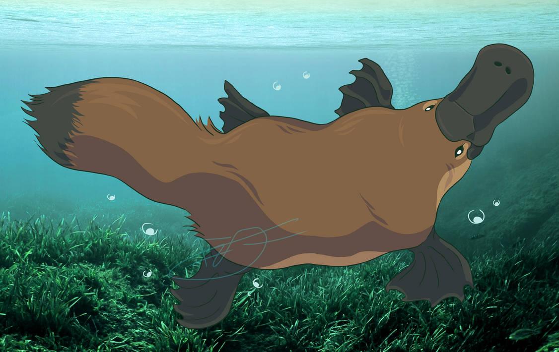 A Platypus?