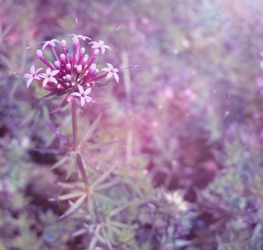 L'eclat d'une symphonie by Blossom-Lullabies