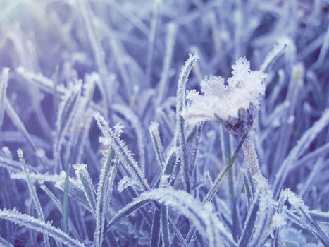 Frozen body, liberated soul
