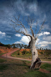 Outback Tree by KarlDawson
